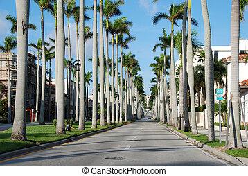 tengerpart, florida, január, pálma, 2007, nyugat