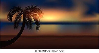 tengerpart, gyönyörű, varázslatos, napkelte, pálma