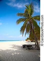 tengerpart, képben látható, a, isla mujeres, mexikó