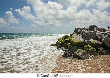 tengerpart, pálma, napos, florida, nap