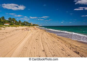 tengerpart, tengerpart, pálma, florida.