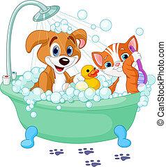 teniendo, gato, perro, baño