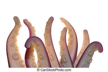 tentáculos, monstruo, aislado