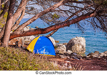 Tent in the shadow of a pine.