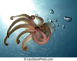 Octopus in back light. Shot captured in the wild.