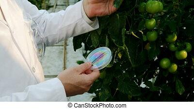 tenue, 4k, spécimen, plante, scientifique, serre,...