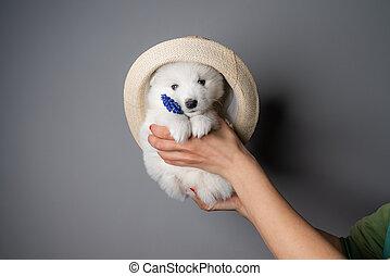 tenue, chapeau, chiot, femme, regarder, blanc, appareil photo, bleu, tient, fleur, mains