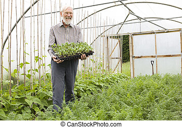 tenue, paysan, plateau, seedlings, serre, organique