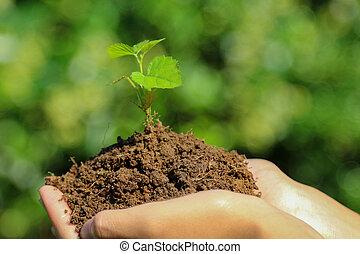 tenue, plante, mains, bébé