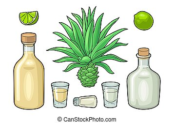 tequila., illustration, couleur, vecteur, blanc, botlle, cactus, sel, isolé, lime., verre