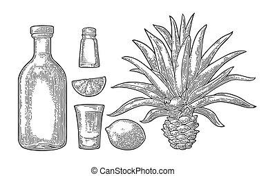 tequila., sel, botlle, verre, cactus, chaux
