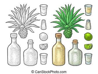tequila., sel, cactus, verre, vendange, lime., botlle, gravure