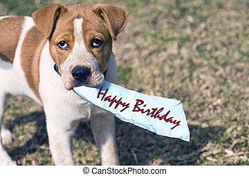ter, um, feliz, birthday.