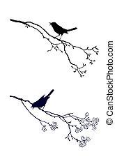 tera, ptáček, filiálka, silueta