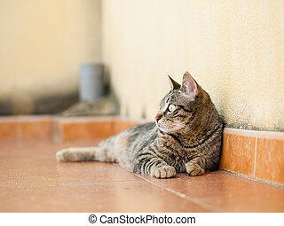 terasa, ležící, kočka