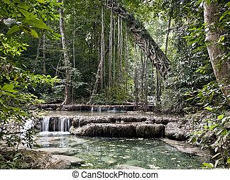 természet, közül, a, dzsungel