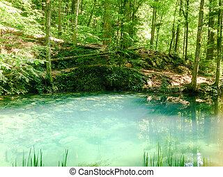 természet parkosít, bitófák, river., erdő, folyó, hegyek