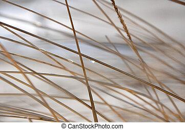 természetes, elvont, fű, háttér
