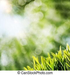 természetes, nap, elvont, háttér, gerenda, zöld fű