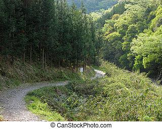 természetjárás, alatt, a, erdő