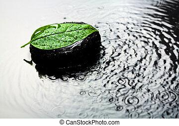 terme, pietra, e, foglia, in, acqua