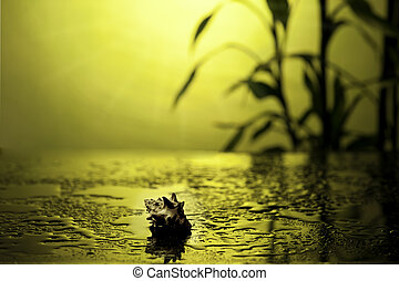 terme, vita, ancora, bambù