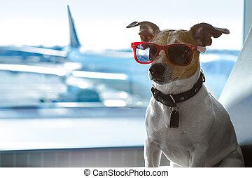 terminale, aeroporto, cane, vacanza