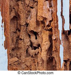 termite, abîmer