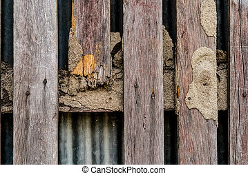 Termite damage on wooden fence
