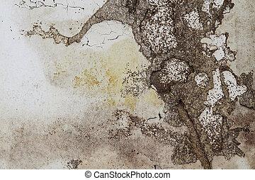 Termite Damage - Termite damage of an interior plaster wall....