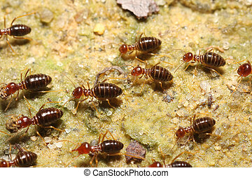 termite group go back - groups of termites transporting food