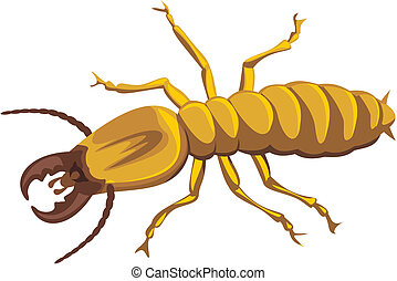 termite - household pest, pest control, social insect