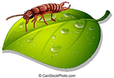 Termite on green leaf on white background