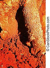 termite, su, albero
