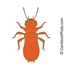 Termite Vector Insect