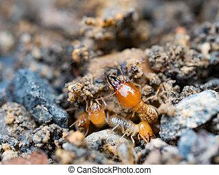 termites, haut, fourmis, destroyed., fin, blanc, ou