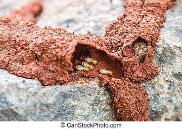 termites in a garden in kenya