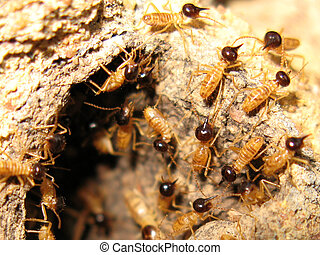 Termites - Kakadu National Park, Australia