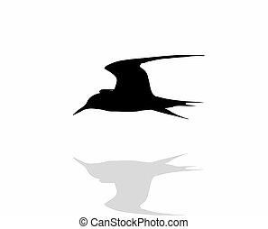 Tern bird over water, silhouette