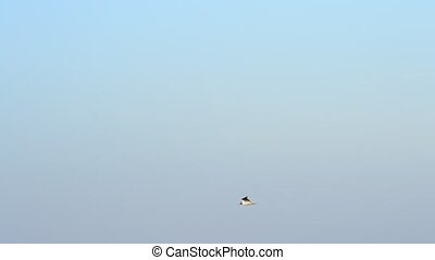 Tern flies fast over calm water surface with lighthouse