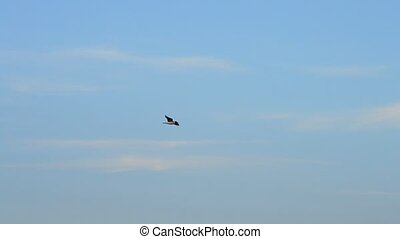 Tern flies high on background of beautiful sky