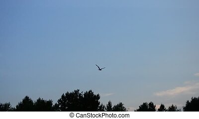 Tern flies high on background of sky, clouds and tops of trees