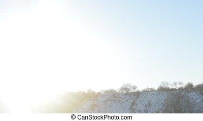 Tern flying in winter on background of blue sky
