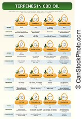 Terpenes in CBD Oil vertical textbook infographic