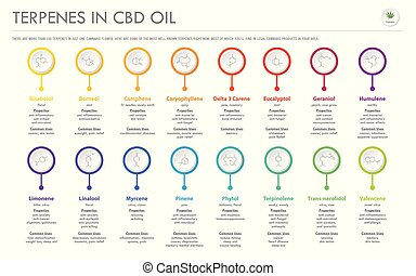 Terpenes in CBD Oil with Structural Formulas horizontal ...