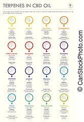 Terpenes in CBD Oil with Structural Formulas vertical business infographic