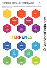 Terpenes in Full Spectrum CBD with Structural Formulas vertical business infographic