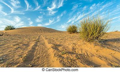 terra, arido