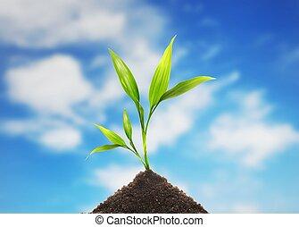 terra, com, planta, broto, contra, céu azul