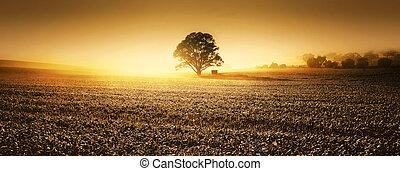 terra cultivada